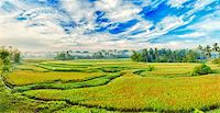 philippine terrace farming - Panorama of the paddy rice field. Philippines Stock Photo - Royalty-Freenull, Code: 400-04349207