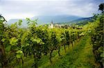 An image of a vineyard and village Stock Photo - Royalty-Free, Artist: velkol                        , Code: 400-04349435