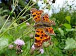 Orange motley butterfly on flower in field Stock Photo - Royalty-Free, Artist: tomatto                       , Code: 400-04361159