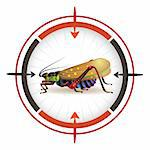 Sniper target with grasshopper Stock Photo - Royalty-Free, Artist: Merlinul                      , Code: 400-04368417