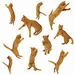 Collection of jumping kittens in action. On white background. 3500 x 3500 pixels.