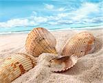 Seashells in the sand at the beach Stock Photo - Royalty-Free, Artist: Sandralise                    , Code: 400-04379857