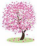 Vector illustration of cherry tree in blossom