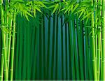 Bamboo forest background Stock Photo - Royalty-Free, Artist: dagadu                        , Code: 400-04382568
