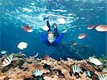 Underwater shot of a snorkeling beautiful woman Stock Photo - Royalty-Free, Artist: GoodOlga                      , Code: 400-04382969