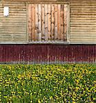 old russian style exterior with old painted wooden planks building number boarded up window grass and dandelions Stock Photo - Royalty-Free, Artist: mrVitkin                      , Code: 400-04386047