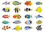 Set of tropical fishes, vector illustration Stock Photo - Royalty-Free, Artist: pressmaster                   , Code: 400-04388191