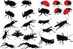 insects collection - vector Stock Photo - Royalty-Free, Artist: vule                          , Code: 400-04394228