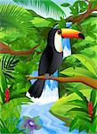Toucan bird in the nature Stock Photo - Royalty-Free, Artist: dagadu                        , Code: 400-04394361