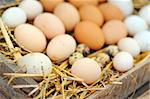 Natural eggs in nest close up Stock Photo - Royalty-Free, Artist: jordache                      , Code: 400-04405367