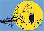 night owl on tree branch, vector background