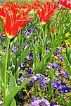 Flower bed Stock Photo - Royalty-Free, Artist: rbiedermann                   , Code: 400-04418806
