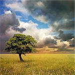 A Lone Tree with Cloudy Sky and Grass Stock Photo - Royalty-Free, Artist: Binkski                       , Code: 400-04419336