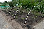 young plants protected under a net in an allotment Stock Photo - Royalty-Free, Artist: hansenn                       , Code: 400-04424495