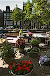 Potted Flowers by Canal, Amsterdam, Netherlands