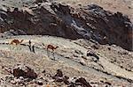 Landscape with camels and men
