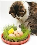 Curious cat looking eggs Stock Photo - Royalty-Free, Artist: Koljambus                     , Code: 400-04447553