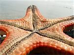 Close up shot of starfish's underbelly Stock Photo - Royalty-Free, Artist: ian_atpn                      , Code: 400-04459579