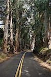 Road through scenic forest. Stock Photo - Royalty-Free, Artist: iofoto                        , Code: 400-04463360
