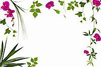 Beautiful floral frame with different leaves and orchids Stock Photo - Royalty-Freenull, Code: 400-04467768