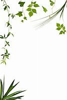 Different kinds of leaves with copy space Stock Photo - Royalty-Freenull, Code: 400-04468279