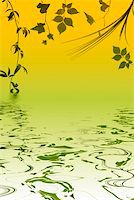 Different kinds of leaves with water reflection Stock Photo - Royalty-Freenull, Code: 400-04475465