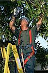 A tree surgeon on a ladder, trimming a tree branch. Stock Photo - Royalty-Free, Artist: lisafx                        , Code: 400-04485227