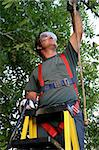 A tree trimmer attaching his safety harness to a branch. Stock Photo - Royalty-Free, Artist: lisafx                        , Code: 400-04485271