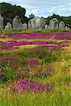 Heather blooming among prehistoric megalithic monuments menhirs in Carnac area in Brittany, France Stock Photo - Royalty-Free, Artist: Elenathewise                  , Code: 400-04487258