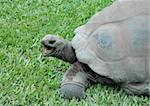 Giant tortoise with open mouth Stock Photo - Royalty-Free, Artist: sandymaya                     , Code: 400-04488431