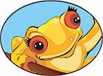 Illustration of a frog Stock Photo - Royalty-Free, Artist: maadesigns                    , Code: 400-04506905