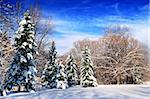 Winter landscape of a sunny forest after a heavy snowfall Stock Photo - Royalty-Free, Artist: Elenathewise                  , Code: 400-04507591