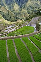 philippine terrace farming - rice terraces in northern luzon the philippines Stock Photo - Royalty-Freenull, Code: 400-04508990