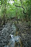Small stream in Daintree Rainforest, Australia. Stock Photo - Royalty-Free, Artist: iofoto                        , Code: 400-04512458
