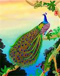 A colorful male peacock sits high in the trees in an Indian jungle by nature artist, Carolyn McFann. Stock Photo - Royalty-Free, Artist: twopurringcats                , Code: 400-04517805