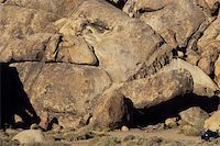 piranha fish - image of a fish in rock formation, California Stock Photo - Royalty-Freenull, Code: 400-04519114
