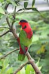 Parrot Perched on a piece of wood Stock Photo - Royalty-Free, Artist: kentoh                        , Code: 400-04521667