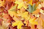 Autumn leaves Stock Photo - Royalty-Free, Artist: phodopus                      , Code: 400-04524600