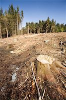 A forest with the trees cut down Stock Photo - Royalty-Freenull, Code: 400-04530387