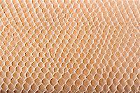 snake skin - Crocodile skin texture close up Stock Photo - Royalty-Freenull, Code: 400-04532557