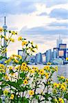 Toronto city waterfront skyline with yellow flowers in foreground Stock Photo - Royalty-Free, Artist: Elenathewise                  , Code: 400-04540835