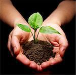 Hands holding sapling in soil Stock Photo - Royalty-Free, Artist: Pakhnyushchyy                 , Code: 400-04549079