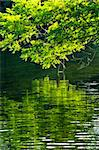 Reflection of green trees in calm water Stock Photo - Royalty-Free, Artist: Elenathewise                  , Code: 400-04553246