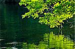 Reflection of green trees in calm water Stock Photo - Royalty-Free, Artist: Elenathewise                  , Code: 400-04553247