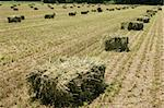 Hay bale in the field Stock Photo - Royalty-Free, Artist: vladacanon                    , Code: 400-04554229