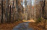 small road in a Virginia forest in the fall Stock Photo - Royalty-Free, Artist: gsagi                         , Code: 400-04555565