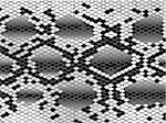Snake skin pattern in black and white Stock Photo - Royalty-Free, Artist: SNR, Code: 400-04558662