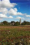 A feild of roses on a rose nursery,with a church in the background Stock Photo - Royalty-Free, Artist: markabond                     , Code: 400-04560218