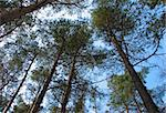 forest tree tops Stock Photo - Royalty-Free, Artist: vadimone                      , Code: 400-04563337