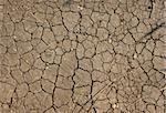 A macro from a dry ground in summer Stock Photo - Royalty-Free, Artist: Ragnar                        , Code: 400-04563577